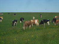 animals2009-05