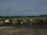animals2011-07