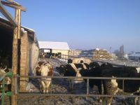 animals2012-02